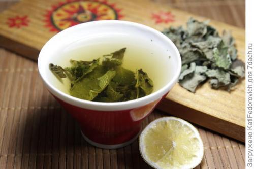 Мята мелисса чай. Чай из мелиссы, мяты и базилика лимонного