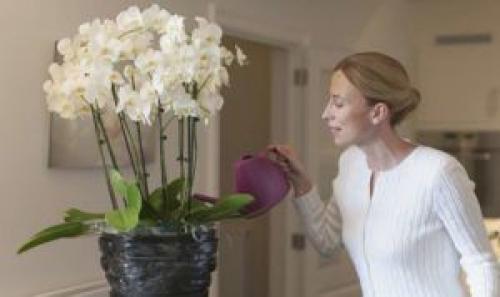 Как ухаживать за орхидеей в горшке в домашних условиях.