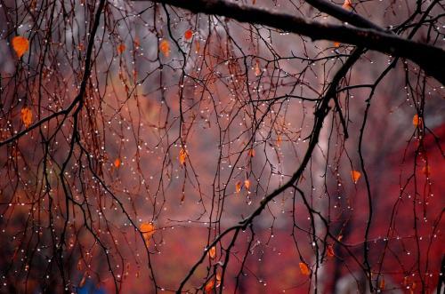 Осенний фотоальбом на каждый день. Планы на осень: 50 важных дел осени