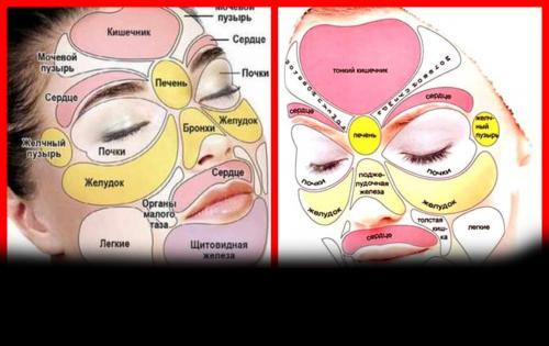 Лицо зоны внутренних органов. Диагностирование болезней по лицу человека