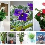 10 растений, которые принесут в ваш дом любовь - сохраните у себя и обязательно попробуйте!