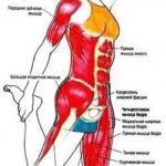 Упражнения для ягодиц и ног.